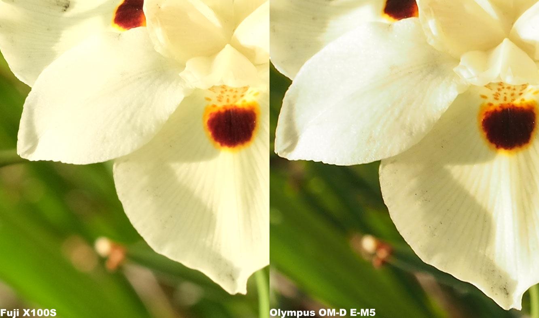 Photo Comparison: Fuji vs Olympus | Steelevisions Blog