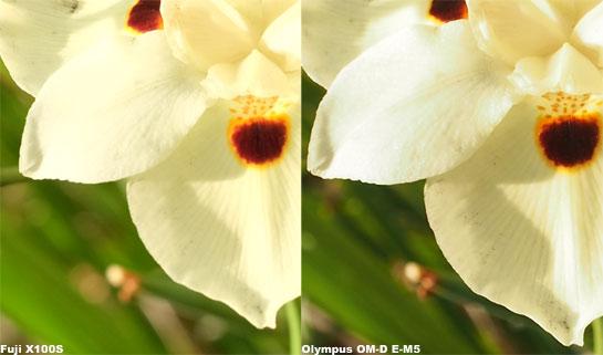 Fuji-Olympus-Flower-100-Percent
